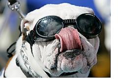 kutya-napszemuveg-04.jpg
